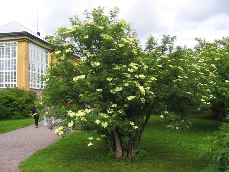 Fl�der ? f�r b�de den nya och gamla tr�dg�rden   Biofilia