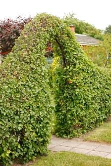 Portal av häckhagtorn