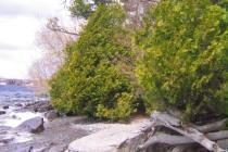 Tujor vid Lake Ontario