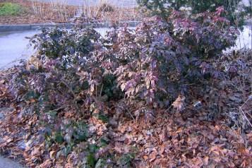 Torra blad från vårsolen i utsatt läge
